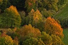 Jesień z brzozami (jadwigatrzeszkowska) Tags: krajobraz jesień braunhausen hesja niemcy jadwigatrzeszkowska