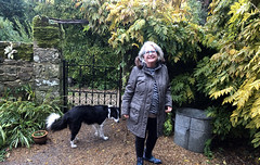 Ritsa at the Gate (RobW_) Tags: ritsa gate border collie mousehall wadhurst east sussex england friday 01nov2019 november 2019