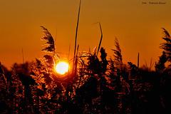 Winterdream (Patricia Buddelflink) Tags: sunrise reed lake sun sky winter