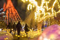 MCE_5310thholidaynightlights1jsm (JayEssEmm) Tags: tower hill botanic garden boylston massachusetts christmas holiday lights night