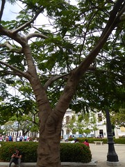 Cienfuegos, Cuba, Day 6 -- Caribbean Cruise Vacation, Parque Jose Marti, Tree (Mary Warren 14.3+ Million Views) Tags: cienfuegoscuba caribbeancruise hollandamerica parquejosemarti park nature flora tree green leaves foliage