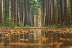 Landgoed celhorst (bartharmsenfotografie) Tags: 2019 lochem ampsen herfst autumn sky clouds rain water regen bos forest woodlands reflection reflectie netherlands holland dutch niederlande achterhoek gelderland
