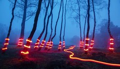 Electric Avenue (J C Mills Photography) Tags: peakdistrict derbyshire lightpainting long exposure blue hour trees woodland birch mist fog