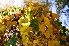 AF14346 (Robert Kielak/Photographer and filmmaker) Tags: branches countryside decoration autumnal autumnleaves falllandscape composition naturebackground concept blur blurred outdoor trees autumnforest organic fresh backdrop rural gold closeup dry wallpaper texture beauty scene oak day vibrant sunny green scenic beautiful seasonal november abstract brown sunlight bokeh background nature fall autumn foliage orange leaf tree season red yellow color park bright forest natural golden landscape october plant light outdoors sun maple pattern colorful garden environment branch flora