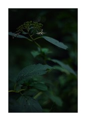 This work is 9/12 works taken on 2019/10/26 (shin ikegami) Tags: sony ilce7m2 a7ii sonycamera 50mm lomography lomoartlens newjupiter3 tokyo 単焦点 iso800 ndfilter light shadow 自然 nature naturephotography 玉ボケ bokeh depthoffield art artphotography japan earth asia portrait portraitphotography