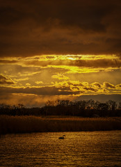 Golden (djrocks66) Tags: sunrise nature waterscape waterscapes swans swan outdoors bay water ocean harbor canal clouds sky color golden boats fishing longisland ny nikon z6 iloveny sunset reflections sun sunlight sunrays rays puddle landscape landscapes nikonusa
