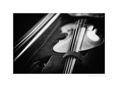 Waiting for the maestra (G. Postlethwaite esq.) Tags: bw dof macro unlimitedphotos blackandwhite bokeh case closeup depthoffield monochrome photoborder selectivefocus strings violin