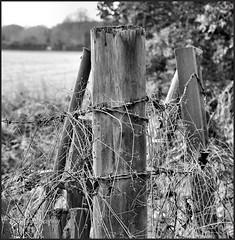 Barbed Wire.. (A.P.PHOTOGRAPHY.) Tags: wallingtonsurrey farmlands localwalk fields sky sun nikond7000 nikkor18300 fences barbedwire blackandwhite lunaphoto