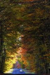 Route du rapin (hbensliman.free.fr) Tags: forest pentax pentaxart tree foliage travel fontainebleau autumn season leaf france nature road