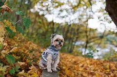 Manyi a padon (sárkánymacska) Tags: olympusom2n kodak pro image 100 zuiko50mm12 magyarország hungary ősz autumn