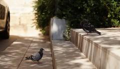 South_Europe_Montserrat (uhtyjejik) Tags: barcelona spain france monaco montserrat birds