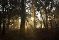 Woodland landscape (Benjamin Joseph Andrew) Tags: autumn winter place space view scenery woodland forest landscape refuge sanctuary sunrise morning dawn