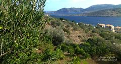 KARDAMYLA CHIOS GREECE (glliadis) Tags: kardamyla xios greece chios liadis agean sea olives sky blue visit island