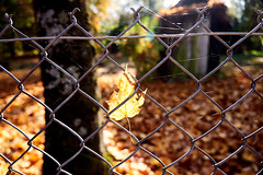 AF14383 (Robert Kielak/Photographer and filmmaker) Tags: branches countryside decoration autumnal autumnleaves falllandscape composition naturebackground concept blur blurred outdoor trees autumnforest organic fresh backdrop rural gold closeup dry wallpaper texture beauty scene oak day vibrant sunny green scenic beautiful seasonal november abstract brown sunlight bokeh background nature fall autumn foliage orange leaf tree season red yellow color park bright forest natural golden landscape october plant light outdoors sun maple pattern colorful garden environment branch flora