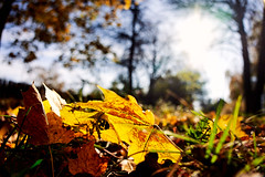 AF14342 (Robert Kielak/Photographer and filmmaker) Tags: branches countryside decoration autumnal autumnleaves falllandscape composition naturebackground concept blur blurred outdoor trees autumnforest organic fresh backdrop rural gold closeup dry wallpaper texture beauty scene oak day vibrant sunny green scenic beautiful seasonal november abstract brown sunlight bokeh background nature fall autumn foliage orange leaf tree season red yellow color park bright forest natural golden landscape october plant light outdoors sun maple pattern colorful garden environment branch flora