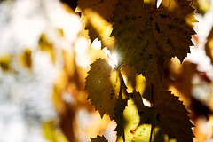 AF14437 (Robert Kielak/Photographer and filmmaker) Tags: branches countryside decoration autumnal autumnleaves falllandscape composition naturebackground concept blur blurred outdoor trees autumnforest organic fresh backdrop rural gold closeup dry wallpaper texture beauty scene oak day vibrant sunny green scenic beautiful seasonal november abstract brown sunlight bokeh background nature fall autumn foliage orange leaf tree season red yellow color park bright forest natural golden landscape october plant light outdoors sun maple pattern colorful garden environment branch flora