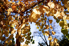 AF14434 (Robert Kielak/Photographer and filmmaker) Tags: branches countryside decoration autumnal autumnleaves falllandscape composition naturebackground concept blur blurred outdoor trees autumnforest organic fresh backdrop rural gold closeup dry wallpaper texture beauty scene oak day vibrant sunny green scenic beautiful seasonal november abstract brown sunlight bokeh background nature fall autumn foliage orange leaf tree season red yellow color park bright forest natural golden landscape october plant light outdoors sun maple pattern colorful garden environment branch flora