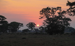 When The Workweek ... (AnyMotion) Tags: sunset sonnenuntergang trees bäume silhouettes 2019 anymotion pousadapiuval pantanal matogrosso brazil brasilien southamerica südamerika américadosul travel reisen nature natur 6d2 canoneos6dmarkii landscape landschaft landschaftsaufnahmen