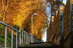 HFF - Fenced Friday - Der Aufstieg zum Friedhof (J.Weyerhäuser) Tags: felder fencedfriday friedhof hechtsheim sonnenuntergang winter