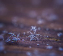 Snowflake (@magda627) Tags: lowkey lookingcloseonfriday coth5 composition winter nature sony tiny flickr snow edit macro anteketborkacom closeup outdoor art detail lightroom white low key looking close friday