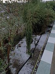 Garten nach Hagelsturm_0552 (Wayloncash) Tags: spanien spain andalusien garten garden pflanze pflanzen plant plants