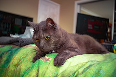 More Sean 002 (commontropes) Tags: sonya7rii sony sean bean cat cats lensbaby burnside