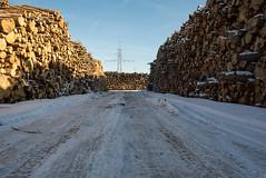_DSC0130 (Ghostwriter D.) Tags: germany munich nikond600 wood winter