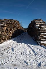 _DSC0128 (Ghostwriter D.) Tags: germany munich nikond600 wood winter