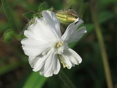 IMG_5368 (jesust793) Tags: flores flowers naturaleza nature