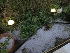 Garten nach Hagelsturm_0553 (Wayloncash) Tags: spanien spain andalusien garten garden pflanze pflanzen plant plants