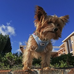 Jerry_20191127_114053 (Wayloncash) Tags: spanien spain andalusien hunde hund dog dogs tiere tier animals animal
