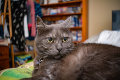 More Sean 003 (commontropes) Tags: sonya7rii sony sean bean cat cats lensbaby burnside
