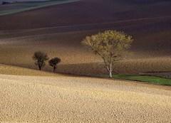 Crete senesi (Jolivillage) Tags: jolivillage cretesenesi paysage landscape paesaggio lumière light luce toscane tuscany toscana italie italia italy europe europa picturesque geotagged