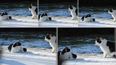 Begegnung angespannt (bratispixl) Tags: indexe animal cat bratispixl