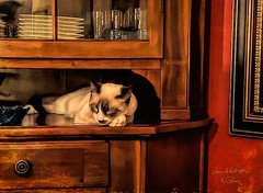 Leonard, Ineffable Leonard (writing - invisible at times) Tags: cats name meditation contemplation ineffable deep inscrutable tseliot