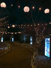 path to Sasebo Garden, River of Lights (johngpt) Tags: riveroflights abqbotanicgardens appleiphone7plus sasebojapanesegarden places fence ~~fencefriday~~ hff