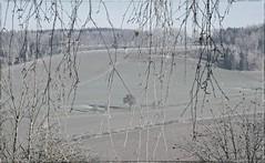 ...vorsichtiges Winterweiß... (shallowcreek) Tags: landschaft landscape natur nature baum tree waldforest meadow herbst autumn feld field fantasy austria