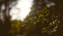 soft (Elmar Egner) Tags: zeiss carlzeiss batis2040 batis240 batis 40 bokeh light tree nature smooth
