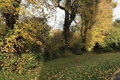 Autumn Leaves (RobW_) Tags: autumn leaves chilham kent england tuesday 05nov2019 november 2019
