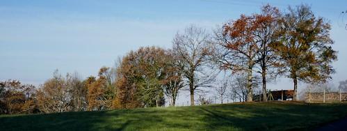 La ligne des arbres, Bosdarros, Béarn, Pyrénées Atlantiques, Nouvelle-Aquitaine, France.