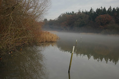 Warnham Nature Reserve (Adam Swaine) Tags: naturelovers nature naturesfinest reeds sussex waterside water lakes rspb mist flora england english britain british uk ukcounties counties countryside canon ducks mallards wildlife animals