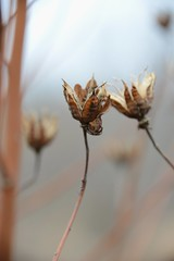trust me (courtney065) Tags: nikond800 nature landscapes wetland flora foliage branchlets sky bokeh blurred abstract hazy pondscape textures brown faded wilted withered fall autumn autumnfoliage seedlings seedpods community trust confidants