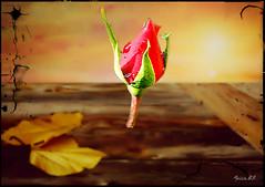 Ultimo aliento (f.breton12) Tags: flores photoshop