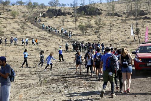 Reforestación Histórica 6D   05