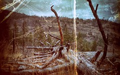 felled (Crusty Da Klown) Tags: okanaganmountianprovicialpark britishcolumbia canada bc canon film kodak felled scripture isaiah tree nature landscape view scenery outside outdoors