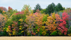 Field's Edge (Kevin Pihlaja) Tags: upperpeninsula michigan autumn fallcolors trees forest field grass foliage nature landscape panasonic lumixs1 woodland