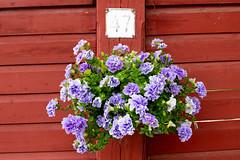 47 (JarkkoS) Tags: 50mmf14g boat boating d850 finland flower flowers kukka porvoo uusimaa