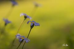 Venimos del vermouth. (Jone Arcos) Tags: flores flowers macro nikond7500 tamron90mmmacro