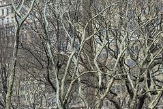 white branches (gianmaria.colognese) Tags: branches rami piante alberi trees groviglio