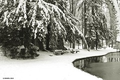 deep winter in the park (holdinghausenm) Tags: winter jahreszeit season hiver park parc snow schnee verschneit schwarzweis schwarzweiss blackandwhite bw nocolors senzacolori monochrome natur nature bayern bavaria outside silence neige white whiteblack whiteandblack peaceful peace